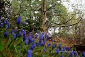 Botanischer Garten Bochunm