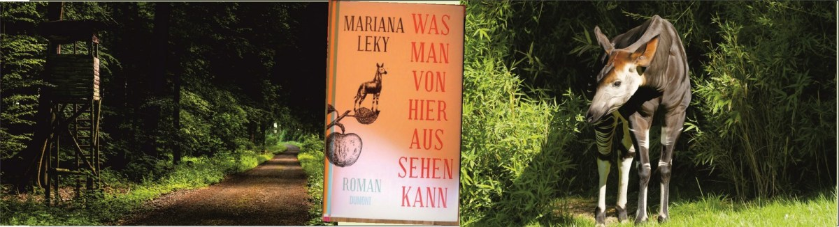 """Ein Okapi im Traum"""