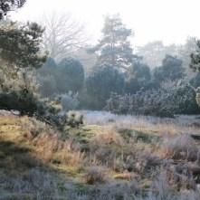Naturschutzgebiet Loosenberge / Schermbeck